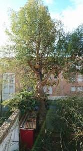 Abatage d'un arbre sur Avignon