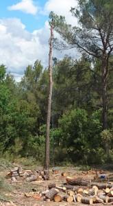 Démontage de pin sur Le Pontet entre ligne EDF et France Télécom